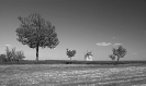 Tési szélmalom / Windmill of Tés